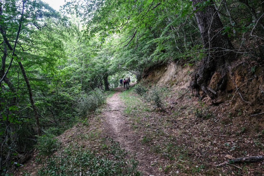 trekking nella foresta